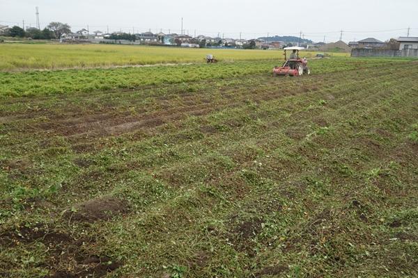 かいはつ農園刈り取り作業全景