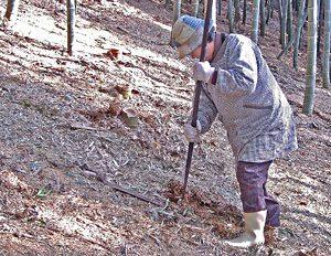 美味しい竹の子 掘り簡単