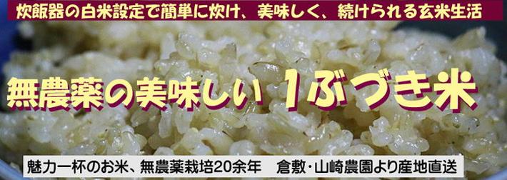 無農薬の美味しい 1ぶづき米